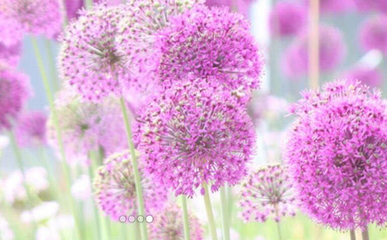 Zinnia Garden Design 2 1 768x476